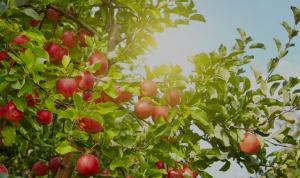 Ambiance fruits