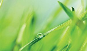 Ambiance herbe