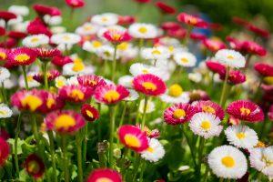 Ambiance fleurs jardin