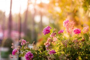Ambiance fleurs
