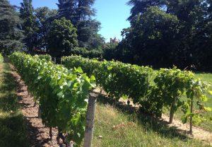 Ambiance vigne